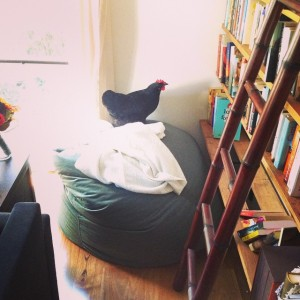 Chicken in Eliza Henry Jones's study