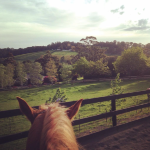Horse and farmland on morning ride