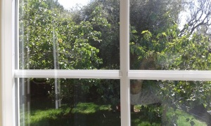 Fruit trees seen from the window of Carolina's writing cottage