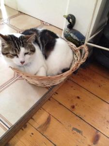 Leah Kaminsky's cat, Kotzy