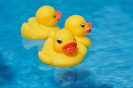 3 rubber ducks in a pool