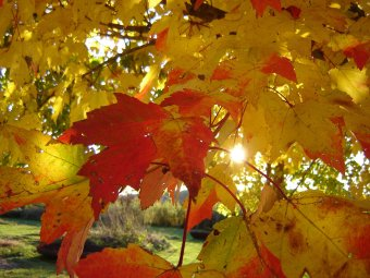 Autumn leaves changing