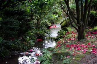 Forest stream with flowers